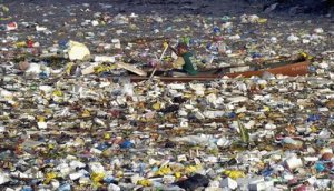 Plastics+Story...Cani+among+the+garbage